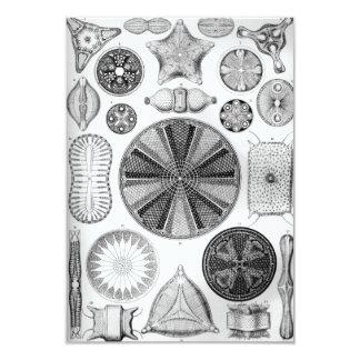 Tarjeta Ernst Haeckel Diatomea
