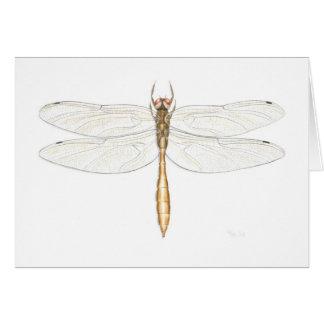 Tarjeta esmeralda cobriza de la libélula