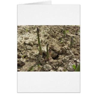 Tarjeta Espárrago verde joven que brota de la tierra