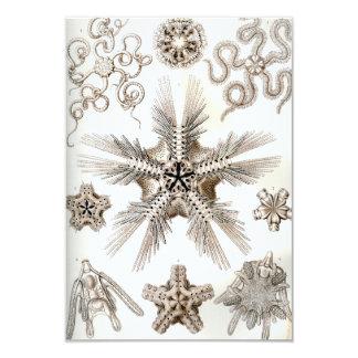 Tarjeta Estrellas frágiles de Ernst Haeckel Ophiodea