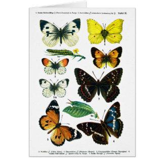 Tarjeta europea de la placa de mariposas II