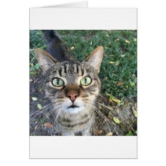 """Tarjeta """"Ey usted"""" dice este gato"""