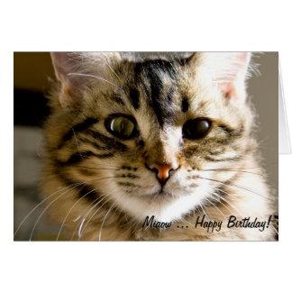 Tarjeta ¡Feliz cumpleaños de Miaow…!