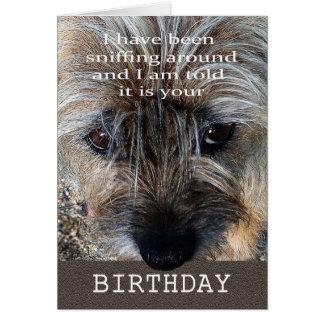 Tarjeta Feliz cumpleaños, terrier de frontera que huele