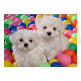Tarjeta Feliz perro de perrito blanco de Bichon Frise del