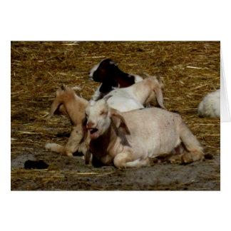 Tarjeta Fiesta de Blank_Goat