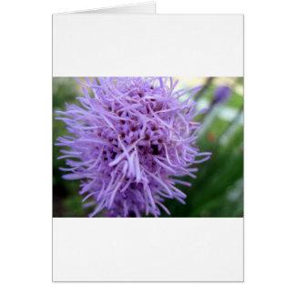 Tarjeta Flor de la violeta de la araña del tentáculo