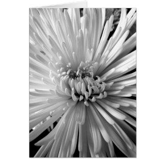 Tarjeta Flor del crisantemo