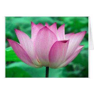 Tarjeta flor del loto