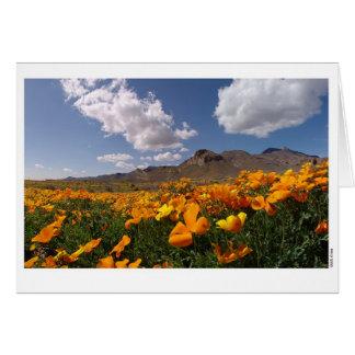 Tarjeta Floración de la amapola - El Paso, Tejas