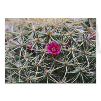 Tarjeta Floración rosada del catus del barril
