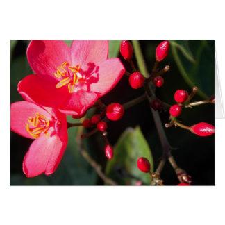 Tarjeta Floraciones del verano en Figi II