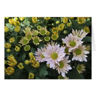 Tarjeta floreciente de los crisantemos