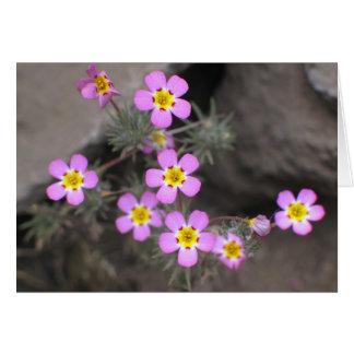 Tarjeta Flores desconocidas, parque nacional de secoya