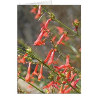 Tarjeta Flores desconocidas, reyes Canyon/secoya