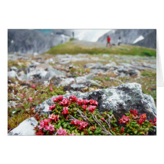 Tarjeta Flores entre rocas