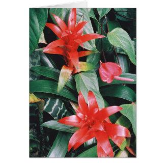 Tarjeta Flores tropicales rojas de Spikey