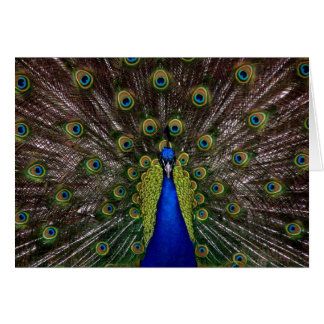 Tarjeta Foto real brillante del pavo real