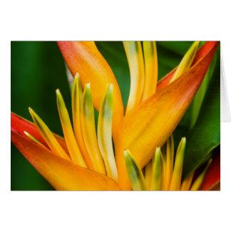 Tarjeta Fotografía de la flor de la ave del paraíso de