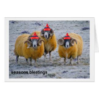 tarjeta fría de Navidad de las ovejas