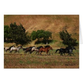 Tarjeta Funcionamiento de los caballos salvajes