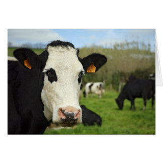 Tarjeta Ganado de Holstein