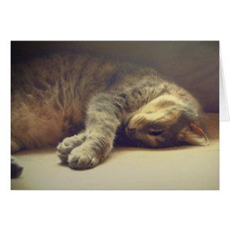 Tarjeta Gato adorable