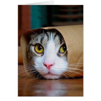 Tarjeta Gato de papel - gatos divertidos - meme del gato -