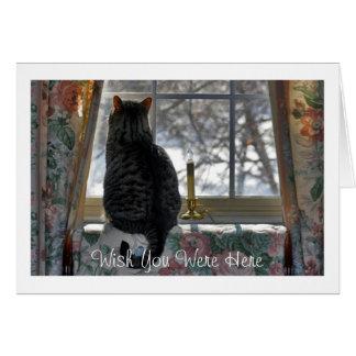 Tarjeta Gato de Tabby que mira hacia fuera la ventana