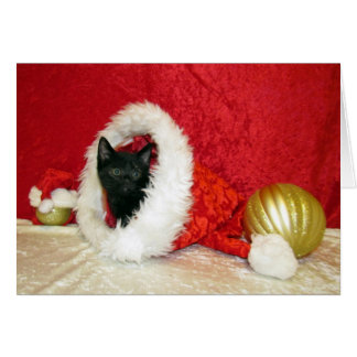 Tarjeta Gato, gatito, navidad, rescate, foto
