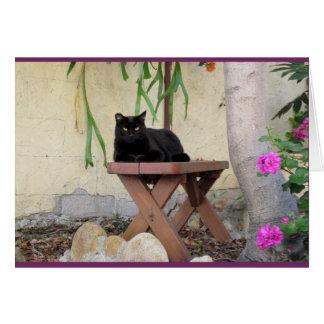 Tarjeta Gato negro en banco con los geranios rosados