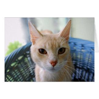 Tarjeta Gato oriental de color de ante de Shorthair