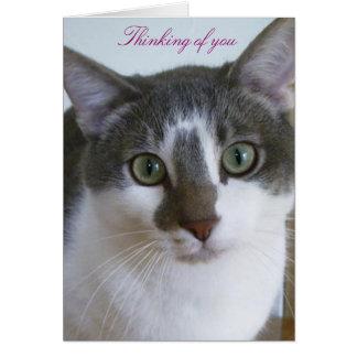 Tarjeta Gato-Pensamiento gris y blanco hermoso en usted
