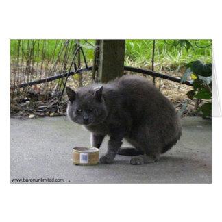Tarjeta Gato sin hogar de Tom