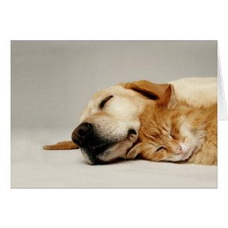 Tarjeta Gato y perro que duermen junto…