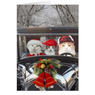 Tarjeta Gatos del navidad en coche