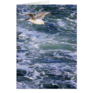 Tarjeta Gaviota en el agua