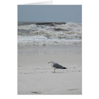 Tarjeta Gaviota en la playa