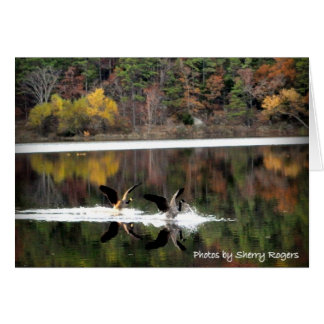 Tarjeta ~Geese en Clayton Lake~