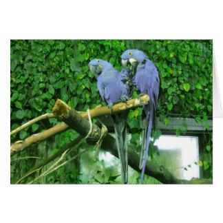 Tarjeta gemela azul de los loros