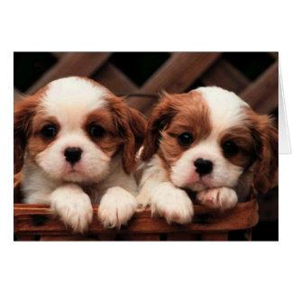 Tarjeta Gemelos adorables del perrito
