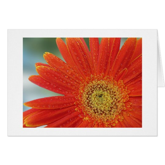 Tarjeta Gerbera anaranjado