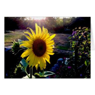 Tarjeta Girasol amarillo en la puesta del sol ---