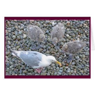 tarjeta Glauco-coa alas de las gaviotas