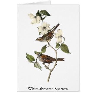 Tarjeta gorrión Blanco-throated - Juan Audubon