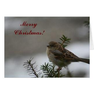 Tarjeta ¡Gorrión de las Felices Navidad!