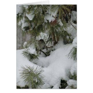 Tarjeta Gorrión en el árbol de hoja perenne Nevado