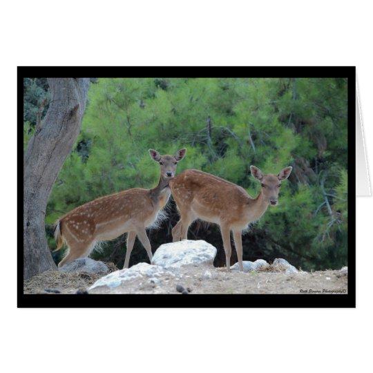 Tarjeta Greeting Card Deer-Tarjeta de felicitacion Ciervos