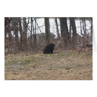 Tarjeta Groundhog examina la escena