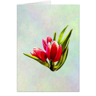 Tarjeta Grupo de tulipanes rojos